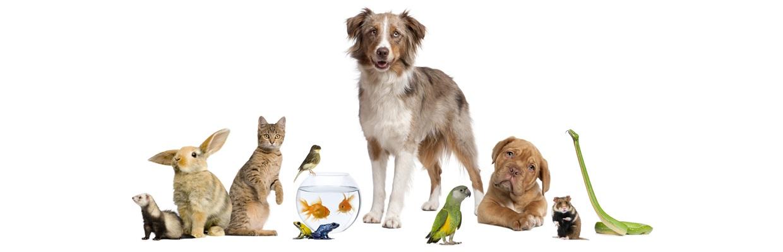 Alles für Haustiere!
