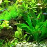 30-Aquarienpflanzen-1000-ml-Flockenfutter-Hauptfutter-Wasserpflanzen-0