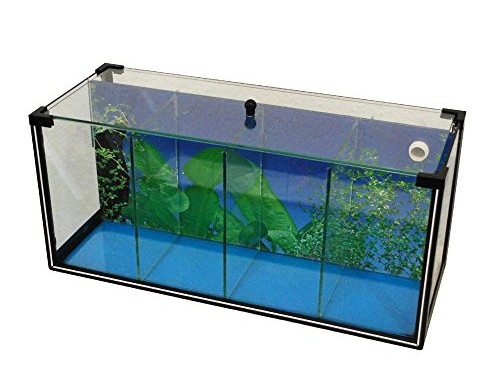 Aquarium zucht becken betta 25 l garnelen aquarium for Kampffisch aquarium