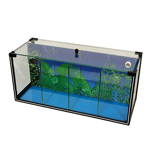 Aquarium zucht becken betta 25 l garnelen aquarium for Kampffisch zucht