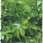 Zoo-Med-BU-36-Cannabis-Kunststoffpflanze-Large-Dekoration-und-Versteckmglichkeit-im-Terrarium-0
