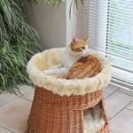 animal-design-Katzen-Haus-Katzen-Hhle-Katzen-Turm-Katzen-Bett-Katzen-Korb-Weiche-Plsch-Einlage-Waschbar--ca-50-cm-Hhe-ca-50-cm-0