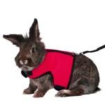 UEETEK-Kaninchen-Harness-Leine-Kleintiergarnitur-fr-Kaninchen-Softgeschirr-mit-Blei-fr-Kaninchen-Hase-Gre-M-Rot-0