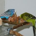 6-teiliges-Schredder-und-Knabber-Set-fr-Vgel-Basisausstattung-fr-Vogelhalter-Wellensittich-Spielzeug-Vogelspielzeug-Nymphensittich-0-1
