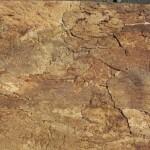 Korkrckwand-innen-Desert-60x30-cm-Terrarium-Kork-Rckwand-92015-0
